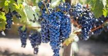 Há uma vinha plantada dentro de nós