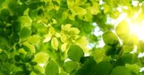 Dinâmica com Folhas Verdes
