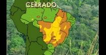 Sobre os biomas brasileiros